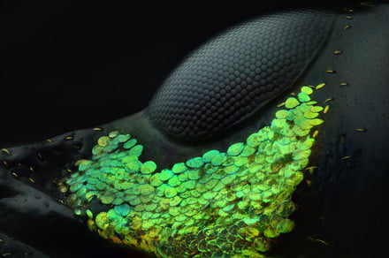 Incredible images reveal the eye of a weevil and other microscopic wonders