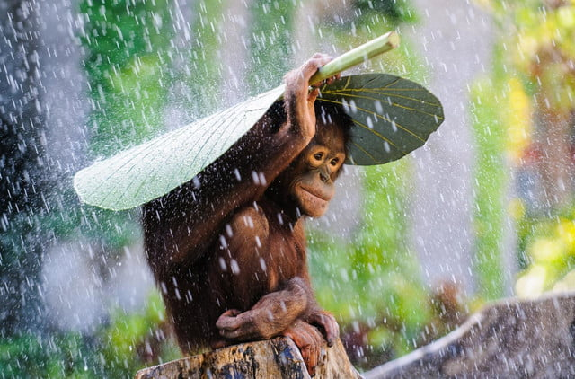 last call for sonys world photography awards 130620796110877052  c andrew suryono indonesia entry nature and wildlife categor
