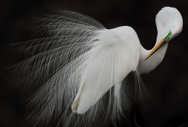 see the winning photos of 2015 sony world audubon society awards photography melissa groo