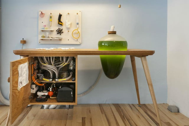 microalgae lamps can light your home and are edible algae lamp 01
