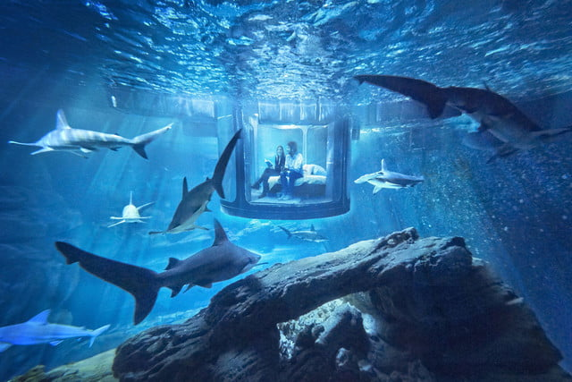 sleep underwater paris aquarium sharks airbnb de shark