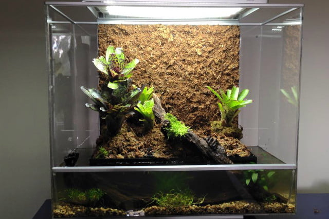 the biopod is a microhabitat thats rainforest on your countertop water