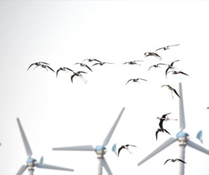 Wind turbines have a bird murdering problem, but a solution is at hand