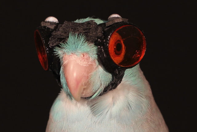 parrot goggles flying robots bird with laser