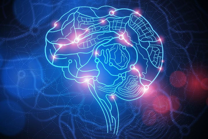 We may soon be able to connect our brains in a 'brainet,' synchronizing our intelligence