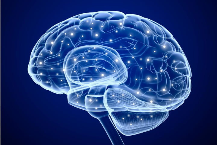 You can now grow a human brain in a petri dish, or at least scientists can