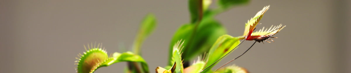 Motion-sensing shrubs and robo-Venus flytraps: Inside the world of Cyborg Botany