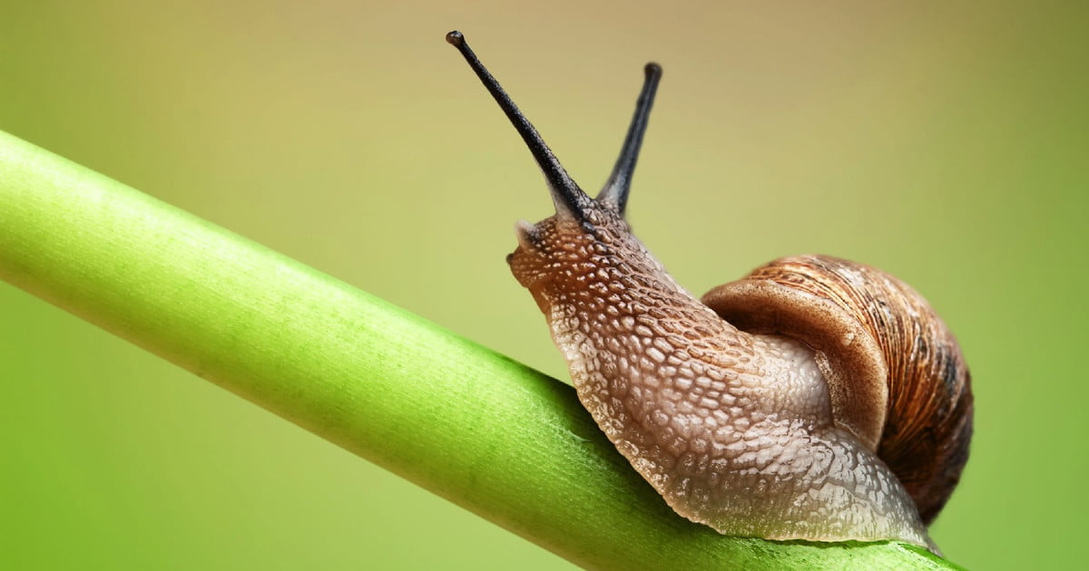 Neuroscientists Figure Out How To Wipe Individual Memories From The Brain -- Of A Snail