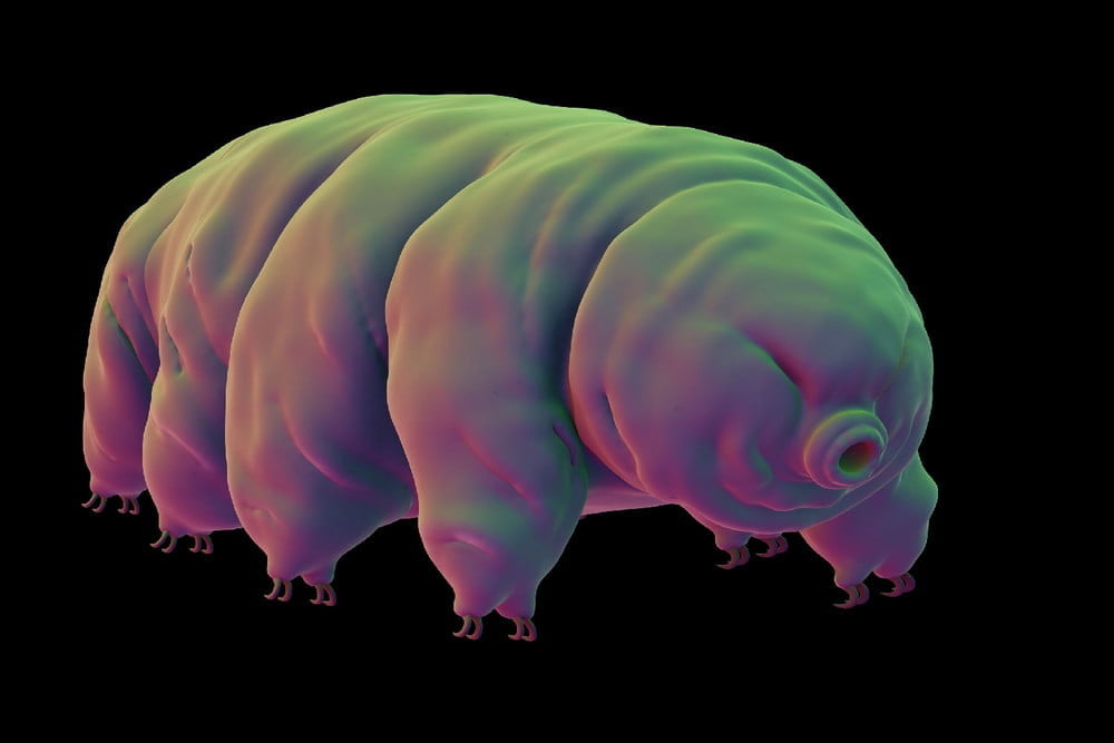 SpaceIL's crashed lander may have sent thousands of tardigrades to the moon
