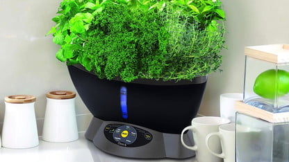 The Best Indoor Herb Gardens For 2020 Digital Trends