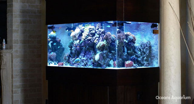 homes with their own shark tanks ag12