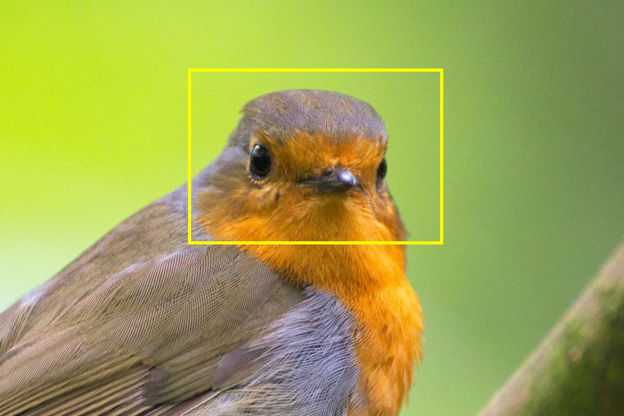 Artificial intelligence can now identify a bird just by looking at a photo