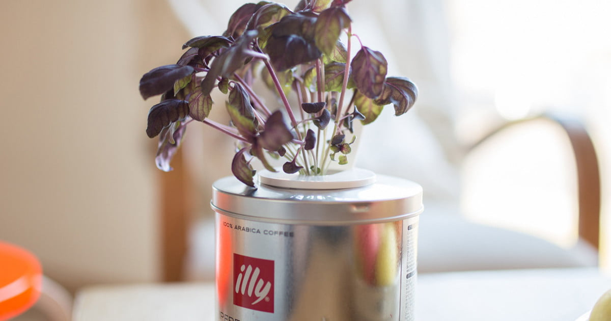 Click and Grow offers a subscription service so your garden is always fresh
