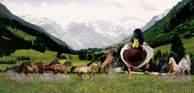 Fight 1 horse-sized duck or 100 duck-sized horses? Here's