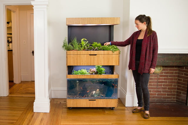 the grove ecosystem launches a kickstarter for its indoor garden a27a5255 edit