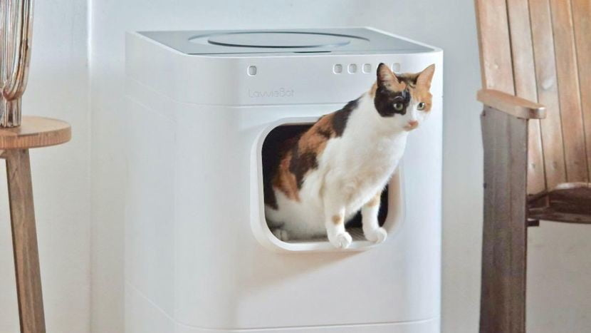 Best Self Cleaning Litter Box 2020.Lavviebot Self Cleaning Iot Cat Litter Box Debuts At Ces