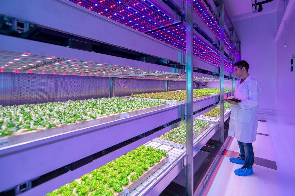LED indoor farms could change the food industry, and help solve world hunger