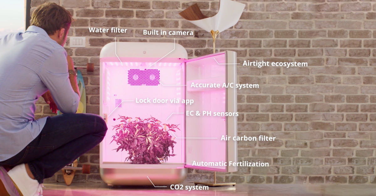Seedo is an A.I.-driven, self-contained grow box for plants of varying legality