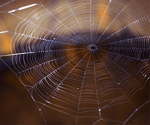 Ability to twist like magic may make spider silk the robotic muscle of the future