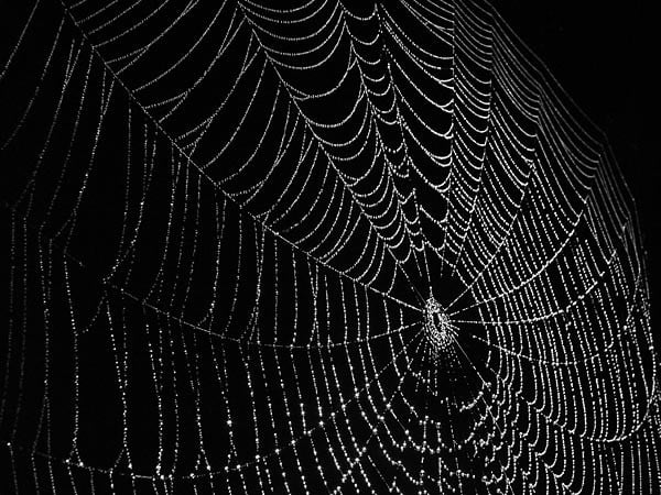 Scientists who sent spiders to the ISS have discovered something truly strange