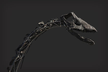 Want your very own genuine Diplodocus skeleton? It'll cost you