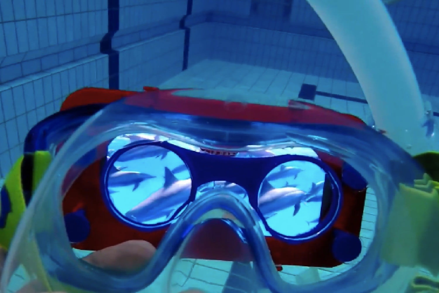 Nonprofit's Therapeutic VR Experience Lets You Swim With Dolphins