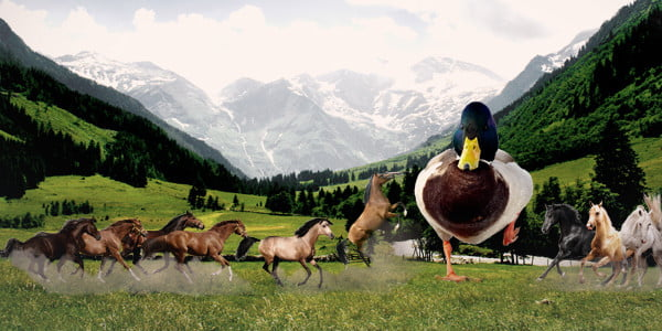 Would You Rather Fight 1 Horse Sized Duck Or 100 Duck
