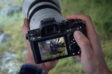 Photography news: Sony brings Eye Autofocus to critters via A.I.