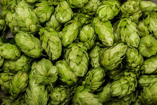 Five fresh hop beers you should already be drinking