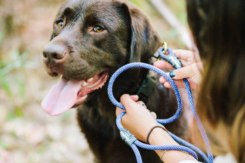 best hiking gear for dogs flowfold trailmate leash