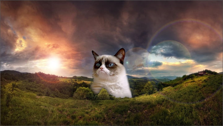funny grumpy cat images hd wallpaper 1080x611 720x720 10 reasons grumpy cat has overstayed 15 minutes of fame digital trends