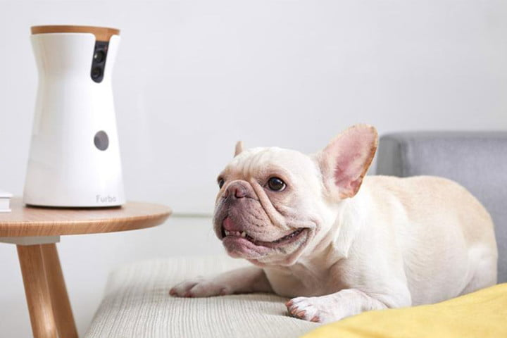 Prime Day deal: Toss your dogs treats and spy on them with the Furbo dog camera