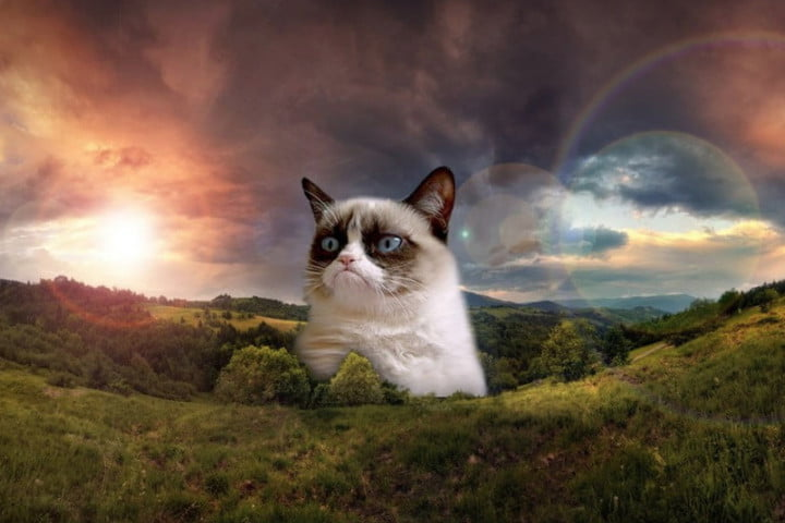 Image of: Twitter Grumpy Cat Awarded 710k In Lawsuit But She Still Wont Crack Smile Glamour Jury Awards Grumpy Cat 710k But She Still Wont Crack Smile
