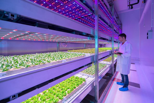 Philips Led Farm Could Change The Farming Industry