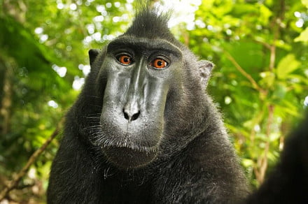 Citing monkey business, court refuses to toss simian selfie lawsuit