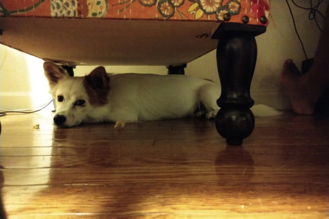 Moto Z2 Force review camera sample dog under chair