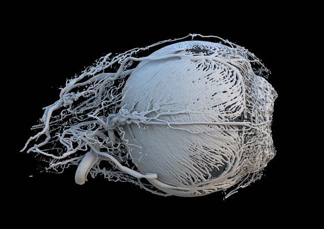 wellcome image awards 2017 n0038323 3d print of vessels a healthy minipig