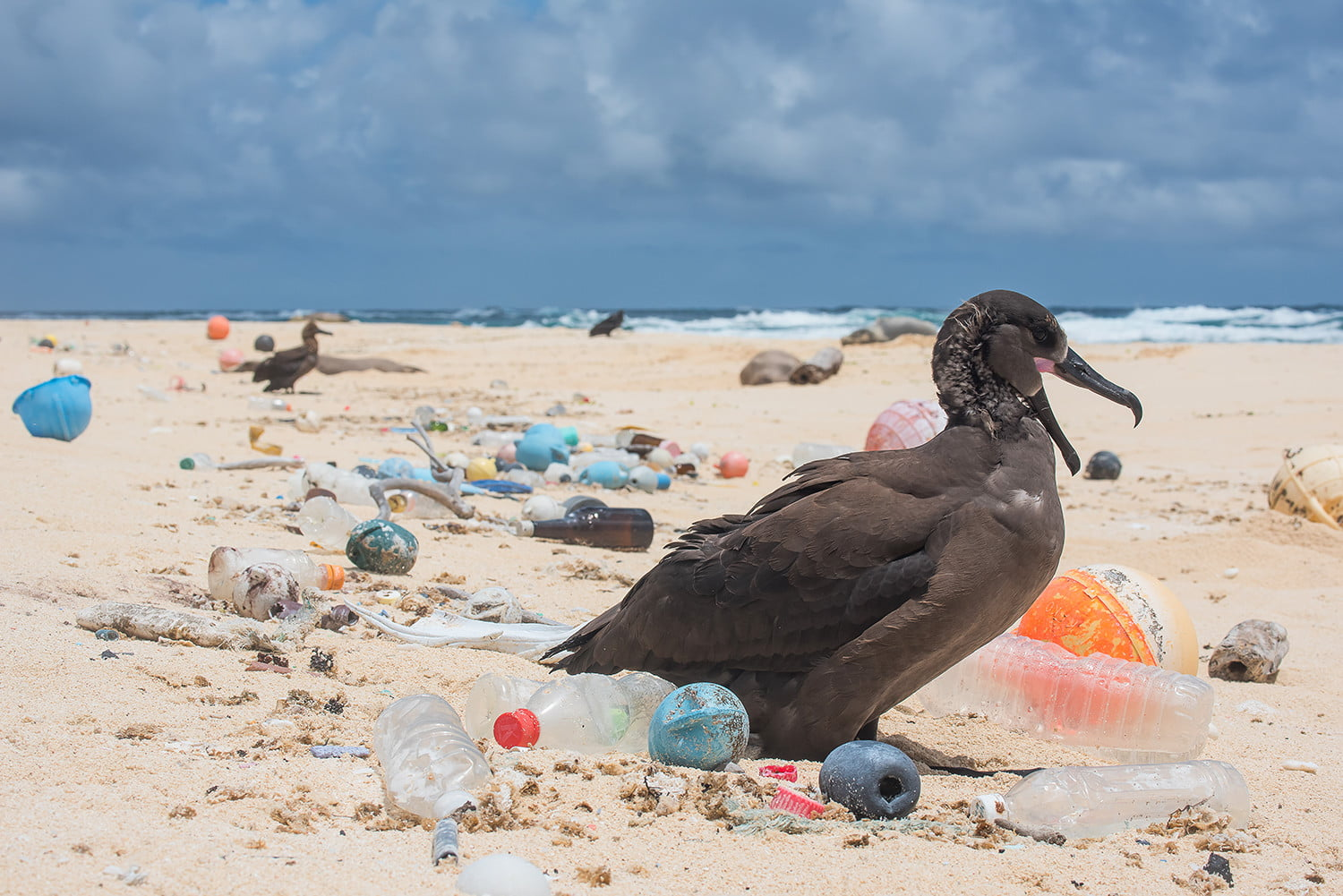 Inside the Ocean Cleanup's ambitious plan to rid the ocean of plastic waste