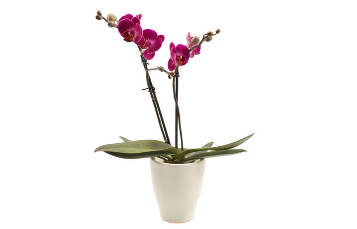 gift ideas for coworker that they will actually want orchid