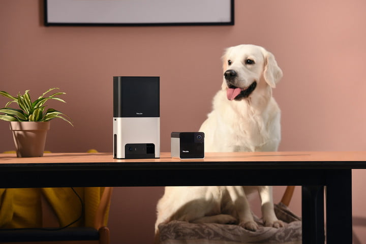 petcube shows off bites 2 play at ces 2019 bites2 play2