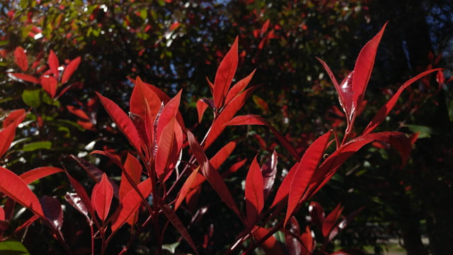 how to use lg g5 manual mode red leaves