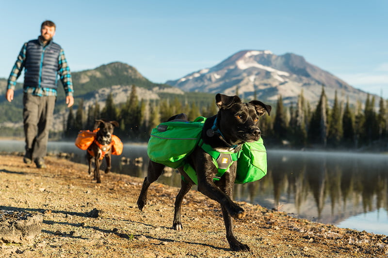 best hiking gear for dogs ruffwear approach pack