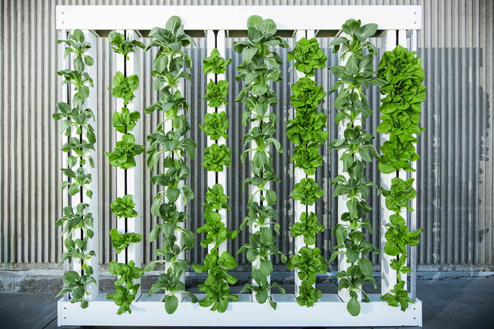 future of food vertical farming 1