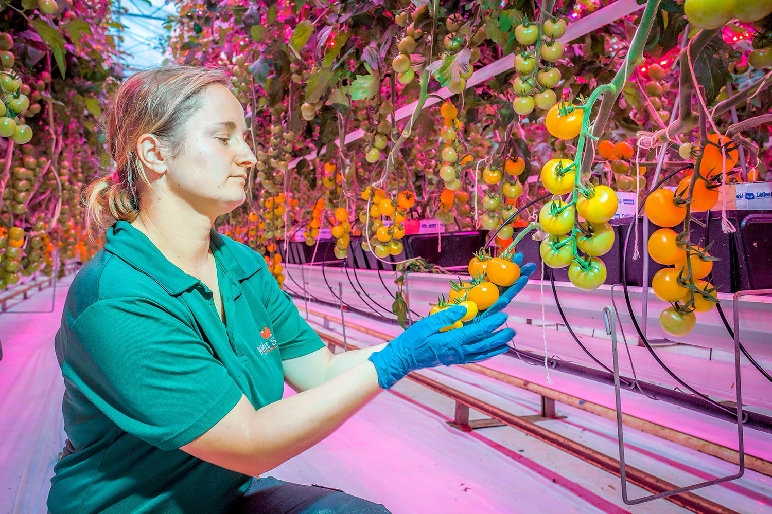 4e63c6c165 Will vertical farming continue to grow, or has it hit the greenhouse ...