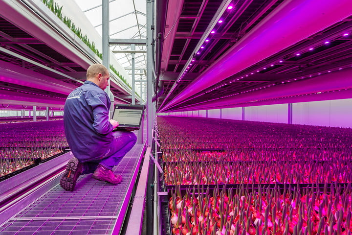 future of food vertical farming 8