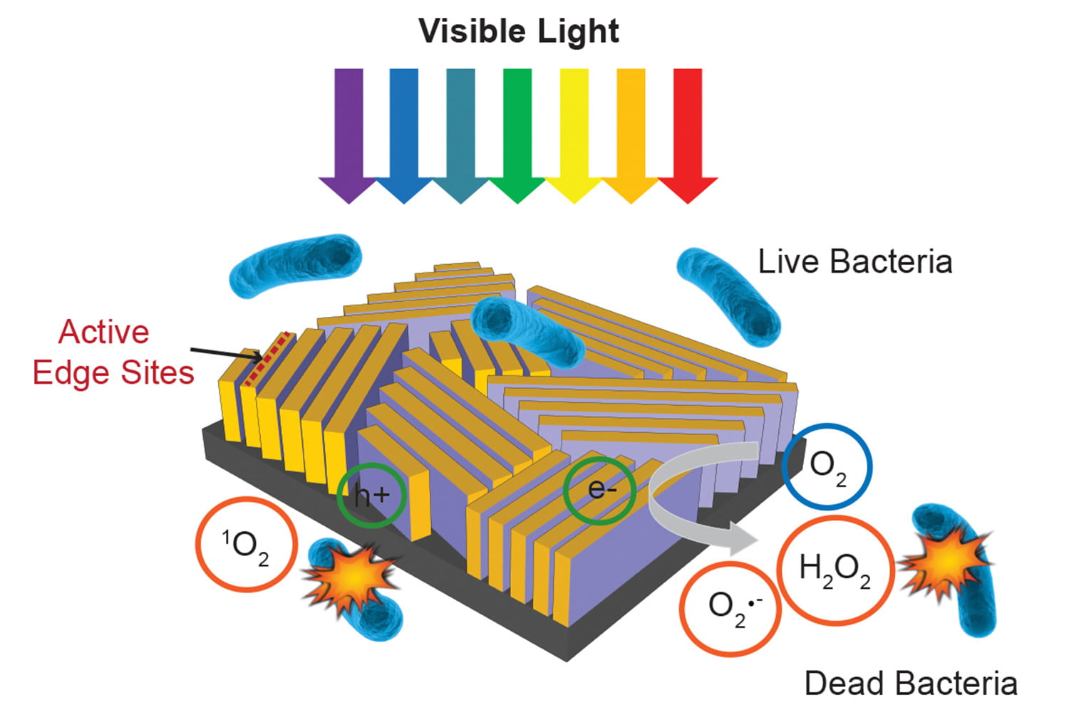 With a touch of sunlight, this tiny device kills 99.999 percent of bacteria