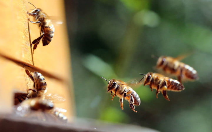 Bees can do arithmetic, setting the scientific community abuzz